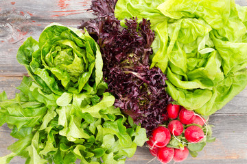 Heads of assorted fresh lettuce with radishes