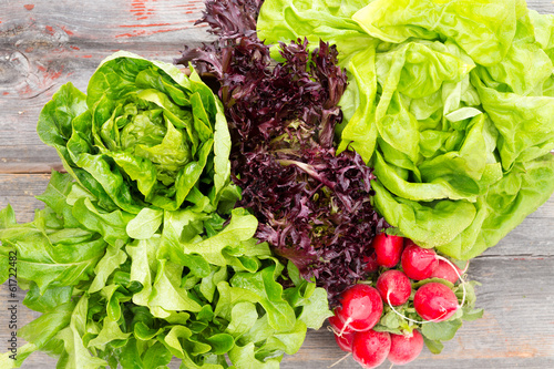 Heads of assorted fresh lettuce with radishes - 61722482