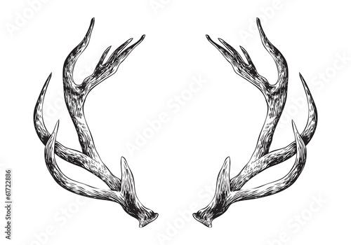 Deer Antlers - 61722886