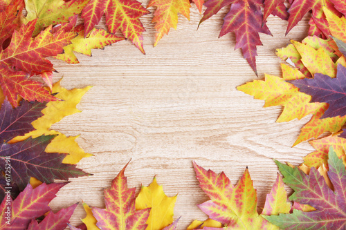 vivid autumn maple leaves on wooden background