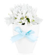 Beautiful snowdrops in vase, isolated on white