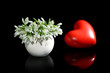 Beautiful snowdrops in vase and decorative heart, isolated