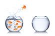 Leinwandbild Motiv fish courage concept