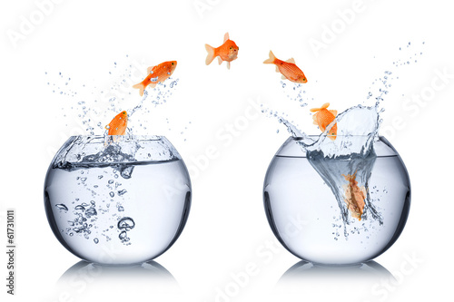 canvas print picture fish change concept