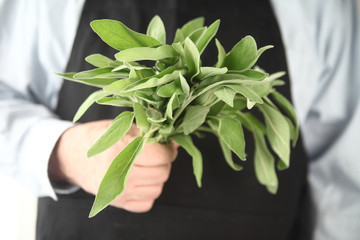 Fresh sage held by man