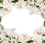 frame from pure jasmin flowers isolated on white