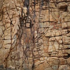 Cracked rock texture