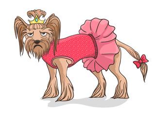 Yorkshire Terrier not happy