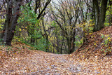 Hiking trail with strewn leaves in the autumn forest