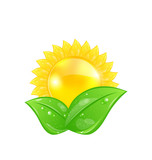 Eco friendly icon with sun and green leaves, isolated on white b