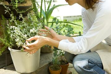 Woman gardening herb