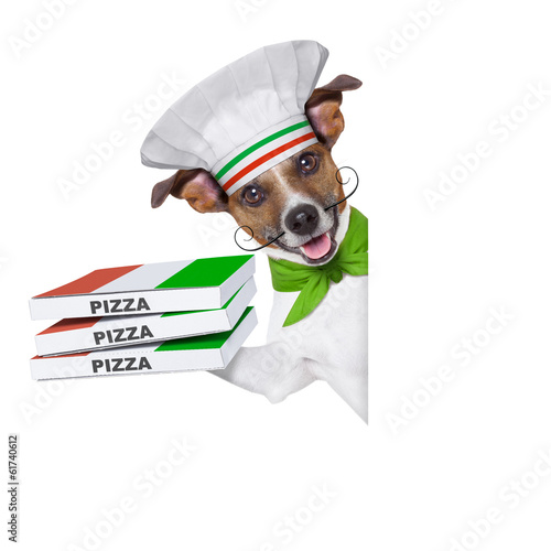 pizza delivery dog - 61740612