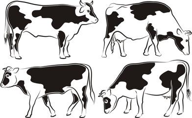 cowa and bull - cattle