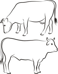 cow and bull - outlines