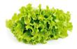 Lettuce salad isolated
