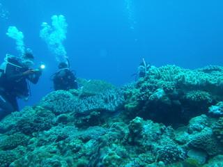 スキューバダイビング 亀を撮るダイバー達 沖縄久米島
