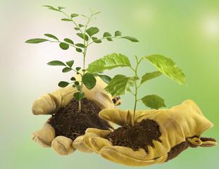 échange de plantes