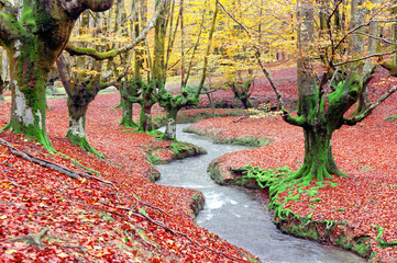 forest in autumn with a stream