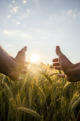 Man cupping the sun with his hands over wheat
