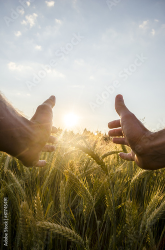 Man cupping the sun with his hands over wheat - 61745491