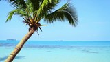 Tropical Paradise at Samui with palm  tree on the beach and ship