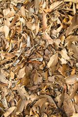 leaves fall, fall season