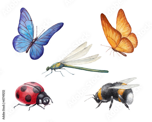 Leinwanddruck Bild Watercolor insects illustrations