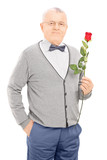 Senior gentleman holding a red rose isolated on white background