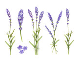 Fototapety Lavender flowers collection. Watercolor illustrations