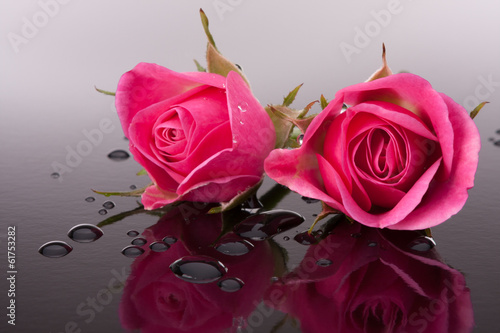 rose flower with reflection on dark surface still life