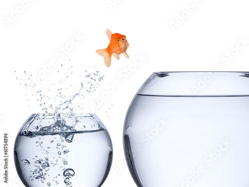 Leinwandbild Motiv fish rise concept