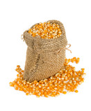 corn in burlap bag isolated on white