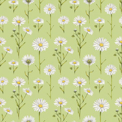 Chamomile flowers illustration. Watercolor seamless pattern