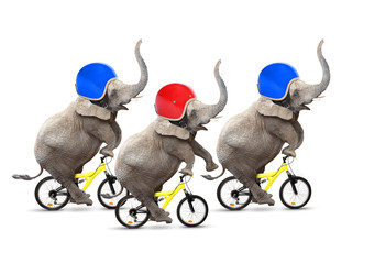 Bicycle race. Three elephants have a fun.
