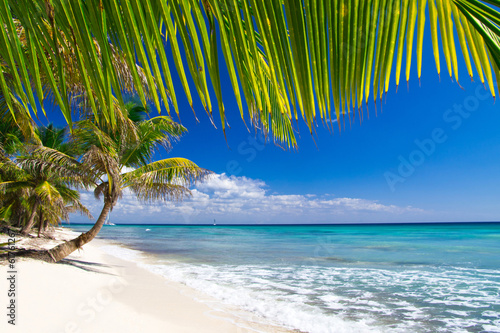 canvas print picture  Beach and Palm tree