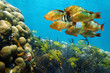 Shoal of colorful tropical fish in a coral reef