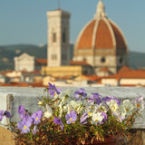 roof garden with view of cathedral of Florence