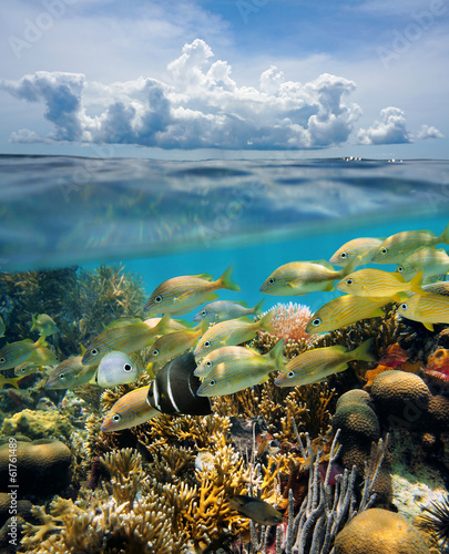 Split view underwater coral reef and cloud