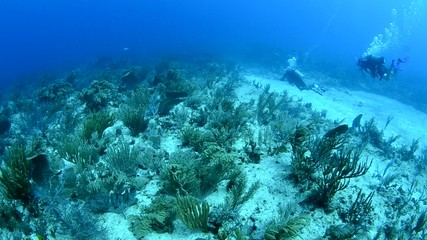 Caribbean shallow reef