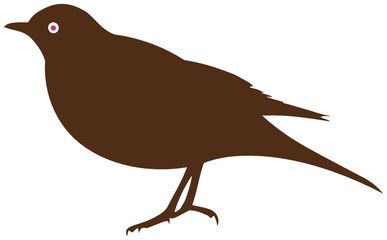 Blackbird or thrush