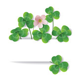 Shamrock flower and leaves