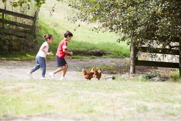 Niños persiguiendo unas gallinas