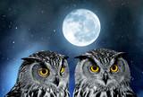 Eagle Owl, Bubo bubo - 61774497