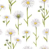Chamomile flowers illustration. Watercolor seamless pattern