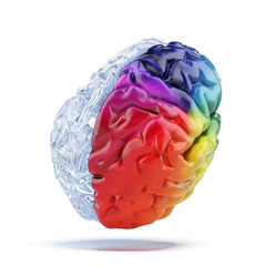 Colored brain