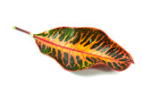 Colorful autumn leaf isolated on white background