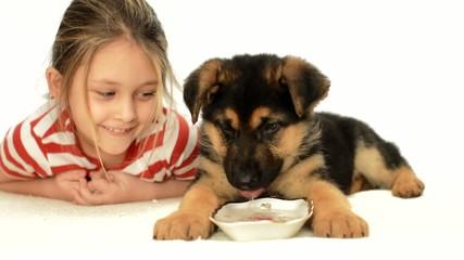Shepherd puppy drinks water