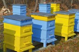 Colourful beehives