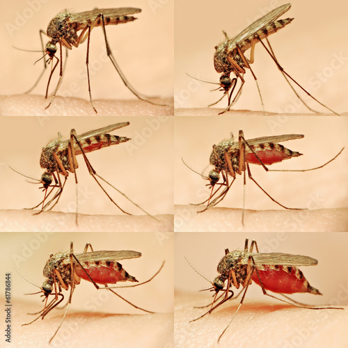The Stages of a Mosquito Bite collage.
