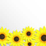 Elegant background with sunflowers